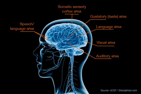 ucsf brain